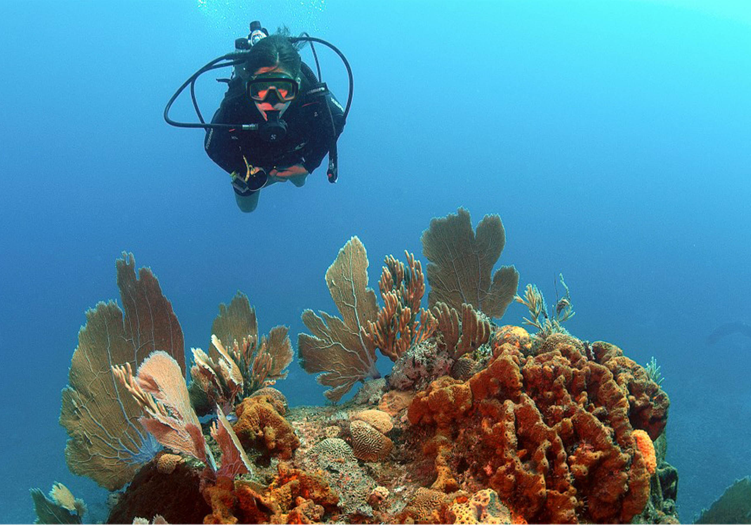PADI Scuba Diver - watersports in Negril, Jamaica