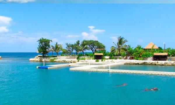 Dolphin Cove scene
